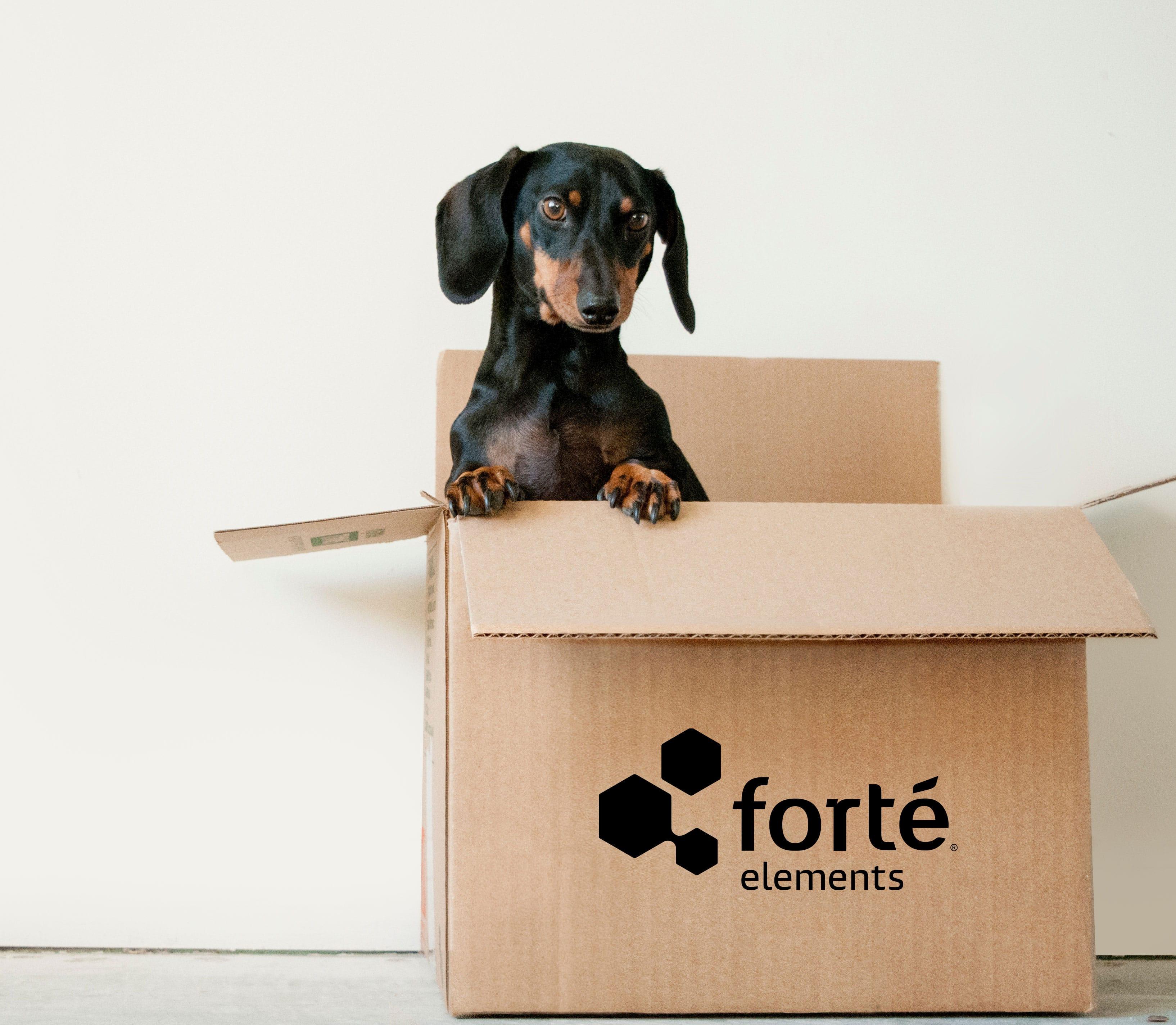 Box-Dog-Small-min (1)
